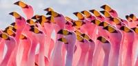 Flamingos - Albert Quesada / Mercat de les Flors de Barcelona